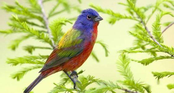 關於鳥的成語以及解釋